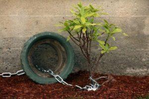 theft-plants-strata